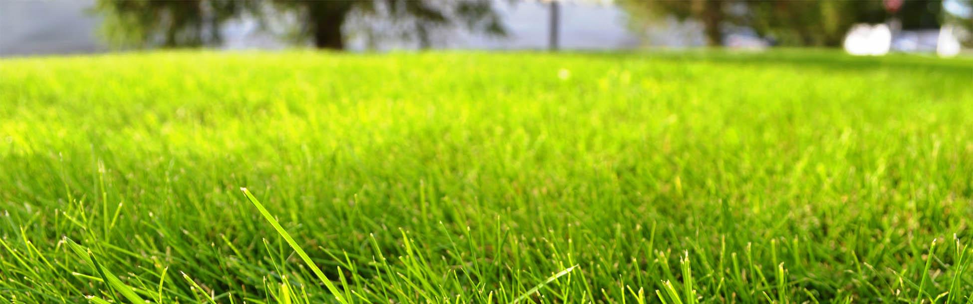 убранный газон